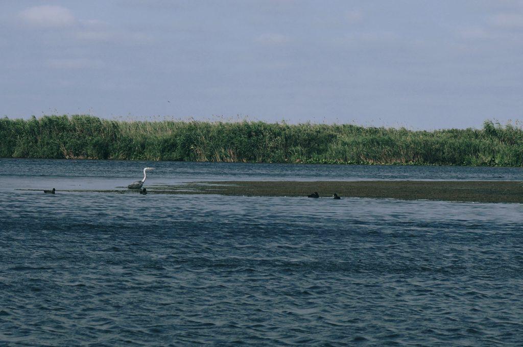 Delta Dunării – 2017